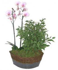 Горшечное растение «Единство непохожих»