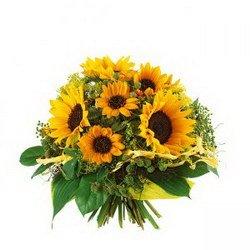 «Солнечный привет»