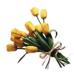 «Тюльпаны»