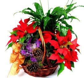 Горшечное растение «Рождественский сад»