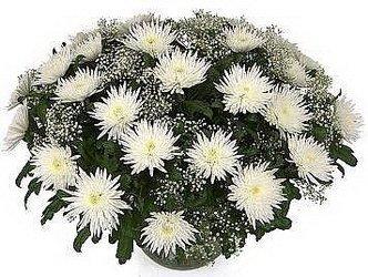 «Счастливый день» Чудесная  корзина из хризантемы одноголовой Анастасия