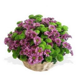 «Цветочная поляна» Поляна из мини-хризантем в лукошке