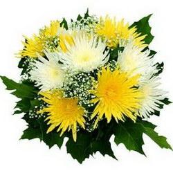 «Торжество» Классический букет на любое торжество из белых и желтых одноголовых игольчатых хризантем сорта Анастасия, украшенный гипсофиллой и зеленью в...