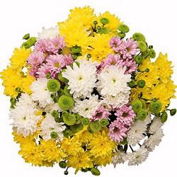 «Веселые веснушки» Букет кустовых хризантем разных цветов -замечательный подарок для любого торжества. Доставка в Порецкое.