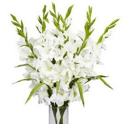 «Величественной особе» Белые гладиолусы означают искренность, уважение и восхищение. Прекрасный подарок для любимых, близких и важных особ. Доставка в Ретинское (г.Полярный).