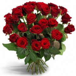 «Первоклассные красные розы» Букет сортовых роз средней длины. Доставка в Страхины.