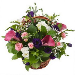 «Она ждет» Подарок к празднику-яркая корзина с каллами, кустовыми розами и белыми фрезиями с тонким ароматом.