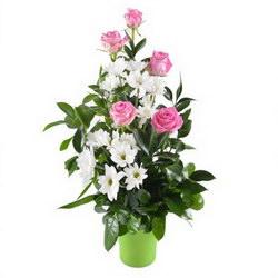 «Не грусти» Высокая композиция в горшочке из белых хризантем ромашкой и нежно-розовых роз с зеленью. Не грусти, пожалуйста, говорит эта композиция за вас. Доставка в Иртек.