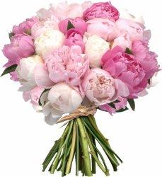 «Мои любимые пионы» Букет шикарных пионов в подарок для любимой. ЗАМЕТЬТЕ, что это сезонный цветок. Наиболее низкая его стоимость — в период с середины апреля до... Доставка в Ретинское (г.Полярный).
